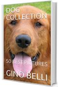 DOG COLLECTION: 50 BEST PICTURES